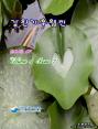 강원기후 2013년 07월호