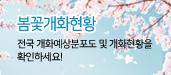 봄꽃(벚꽃, 철쭉)개화현황입니다.